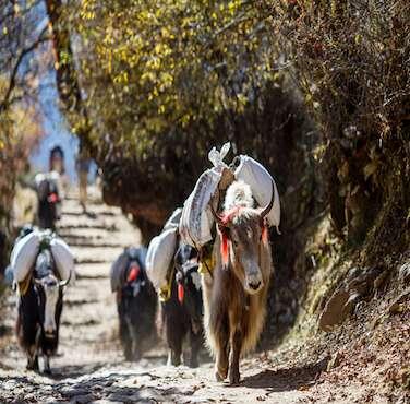 Wilderness Region Trekking - Himalayan Frozen Adventure